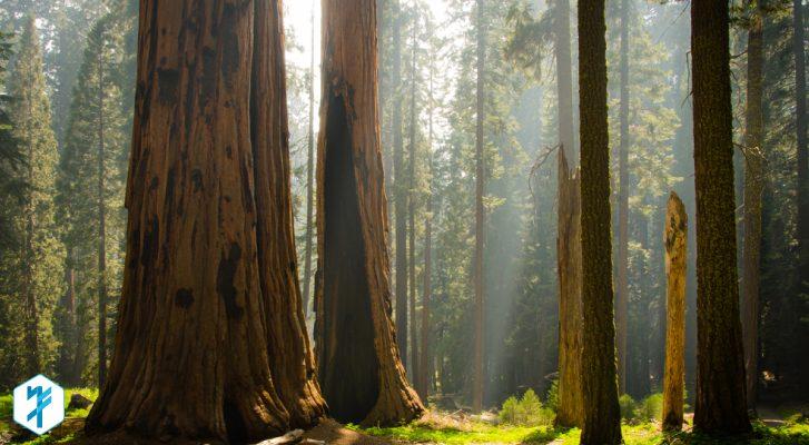 BLOG_redwoods